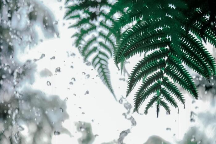 残念なお天気も好きになるかも。雨を楽しむ過ごし方