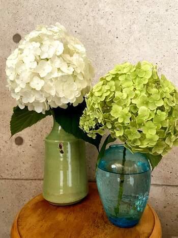 あじさいの中でも大きな花房を持つ品種「アナベル」。ボリューム満点の花なので、存在感のある花器がよく似合います。1輪ずつ別々の花瓶に生けて、並べて飾っても素敵です。  生花を玄関に飾ることは、風水的にも◎ あじさいとお気に入りの花器があれば、運気も気分も上がるでしょう!