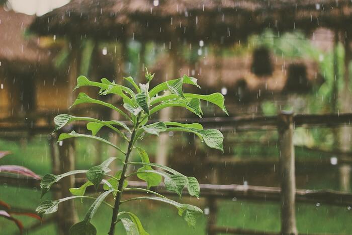 美味しいを待ちわびる。「梅雨の手仕事」レシピ帖