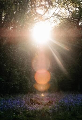 """揺れ動く""""不安な気持ち""""を和らげるには?ヨガ哲学に学ぶ、7つの心の持ち方"""