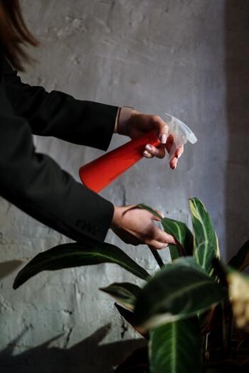 除菌・消臭にも大活躍!夏の必需品「天然素材の虫除け」特集