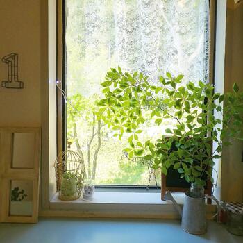 玄関にフレッシュグリーンが飾ってあると、お家に入った瞬間に気持ちがほっこりと温まります。  お手入れもそれほど手間ではなく、青々とした葉っぱを維持できる「ドウダンツツジ」は玄関にもよく合う切枝です。