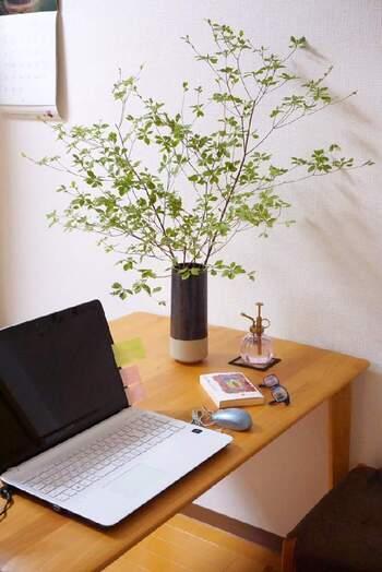 ワークデスクを兼ねたダイニングテーブルなら、大ぶりな枝の「ドウダンツツジ」をアレンジして、カフェ風に。  ダイニングテーブルに置くときは、まだ葉が密集していない春から初夏にかけての「ドウダンツツジ」がおすすめ。軽やかさが大切です。