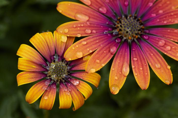 まるい水滴が植物の上にきらきら乗ります。雨に打たれても水をはじくその力に、なんだか勇気をもらえそう。