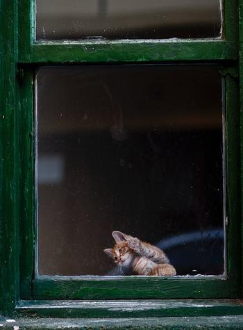 窓を打つ雨を気にして出窓まで出て来た猫ちゃんと、ガラス越しに目が合うかもしれません。何気なく見た軒下や車の下に、雨宿りをしている子たちもいるかも。