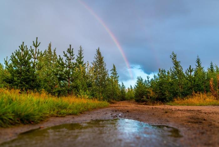 お散歩の途中で雨が止んだら、虹が見られるかもしれません。  「今、虹が出てるよ!」と伝えたくなった相手が、きっとあなたの大切な人なのかもしれませんね。