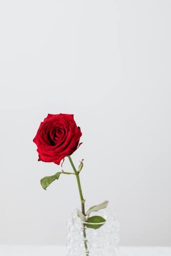 気負わずにはじめよう。「花のある暮らし」を自分らしく楽しむヒント