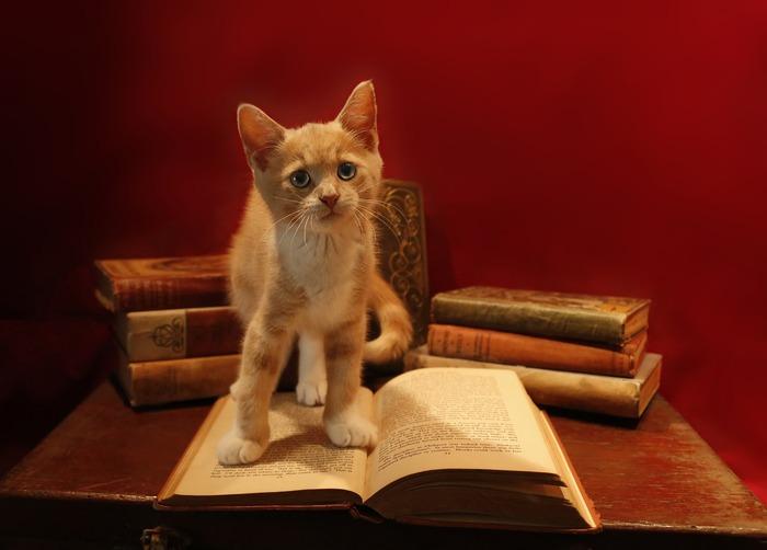 インテリアや贈り物にも!見て読んで癒される「猫の本」
