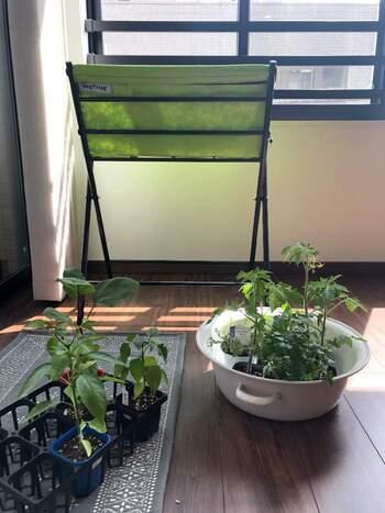 基本タイプのサイズは約幅65×奥行42×高81.5cm。コンパクトタイプは約幅45×奥行30×高さ71cmと、ひとまわり小さくなります。基本のタイプなら土の容量は約30L入るので、一般的なプランターサイズ(65cm)のなんと倍以上もの植物を育てることができる計算に。