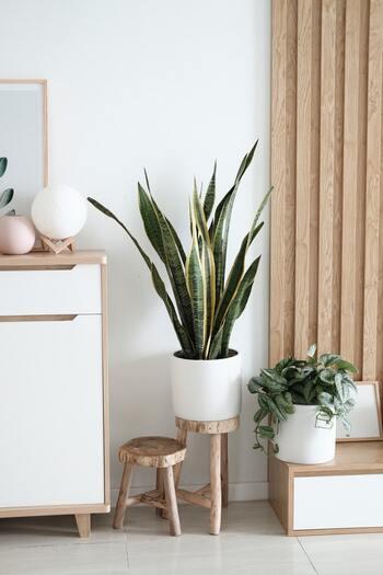 観葉植物やフラワーはとても大切な存在。自然をより身近に感じるスウェーデンでは、緑のある暮らしは欠かせません。どこのうちにも窓際やテーブルの上に必ず置いてあります。引っ越し祝いの定番ギフトとしても観葉植物は大人気です。