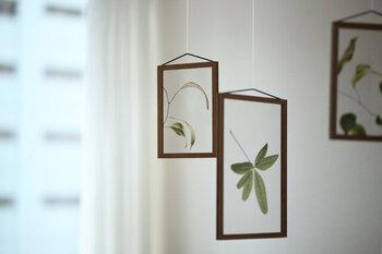クリアフィルムに植物がプリントされた、斬新なアート。置いたり、壁に掛ける以外に、吊るして楽しむのもおすすめ!