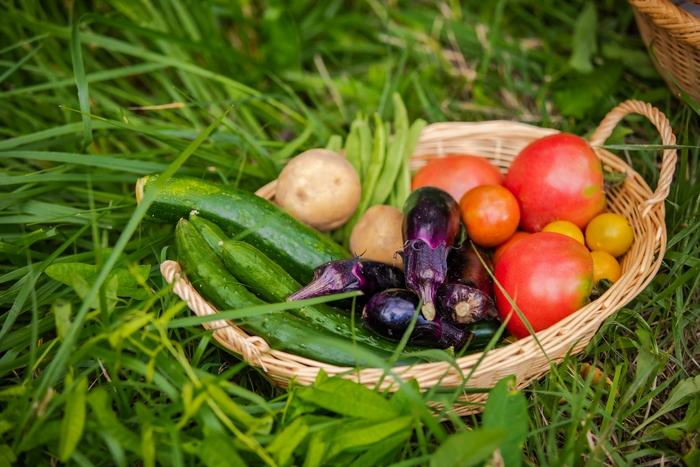 美味しい旬の恵みを味わう!15分以下で作れる「夏野菜」を使ったメインレシピ