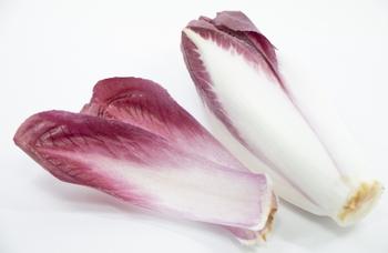 「チコリ」には淡い緑色の葉のタイプのほか、赤紫色の葉のタイプもあります。時期をずらして、ベルギー産、ニュージーランド産、そして国産などさまざまな産地の「チコリ」が出回り、一年中、いつでも食べることができる野菜になりました。