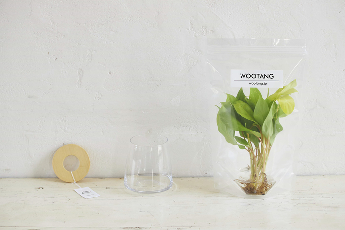 忙しくても大丈夫。育てやすい工夫が詰まった「WOOTANG」で始める、憧れのグリーンライフ