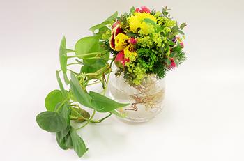 キュキュッとまとめたお花をプラスすることで、「お花の密集したボリューム感」と「オキシカラジウムの茎のライン」のコントラストが際立ってまた違った表情に!  特別な日のテーブルにプラスできるほど、心躍る華やかさをまとっていますよね。  お花が加わる分、蒸れやすさが増すので、空気の通りをよくしてあげることをどうぞお忘れなく。