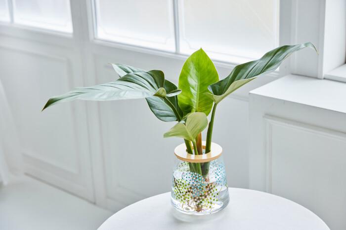 実際に植物を飾ってみたイメージはこちら。もともとのガラスの涼やかな透明感は残りつつも、器の存在感が増して葉の主張とバランスがとれたようにも思えますよね。
