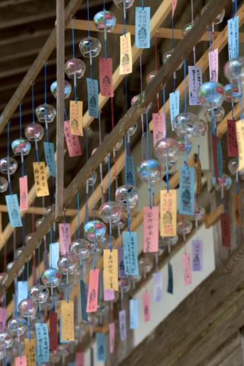 昨年は約1,500個の風鈴が並んだ境内。所々にふくろう達がいる境内に風鈴がたくさん吊るされる風景を求め、老若男女が訪れています。「厄疫消除 疫病退散」と書かれた短冊の風鈴を奉納することもできますよ。