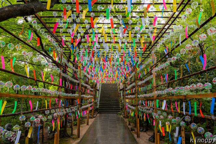 本堂へと向かう参道には風鈴のトンネルがあり、この幻想的な風景はお寺の夏の風物詩としてすっかり定着しました。風が吹くと一斉に鳴り響き、涼やかな音色に暑さも和らぎます。風鈴の短冊に願い事を書いて奉納できますよ。開催中に参拝者の風鈴の数がどんどん増えていき、最終的には約9,000個になるんだそう。