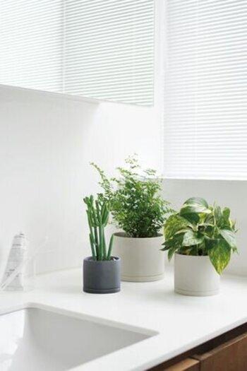 たとえば洗面台近くの窓に、グリーンを飾ってみませんか? 日に当たって活き活きと輝くグリーン。見ているだけで元気をもらえます。