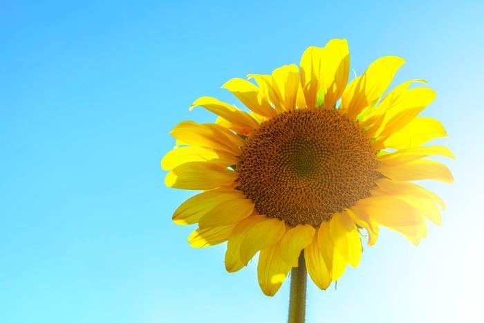 いくつ聞いたことがありますか?風情を感じる、美しい「夏の大和言葉」