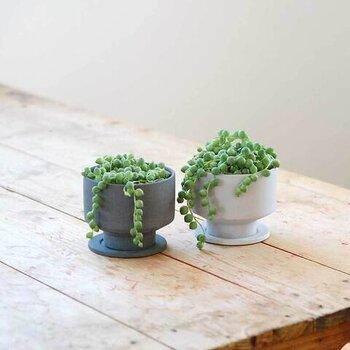 緑の粒が連なる観葉植物「グリーンネックレス」と、モノトーンの鉢のセットです。すっきりしたデザインで、窓辺に置くのにぴったり。月に2回ほどの水やりでいいそうです。