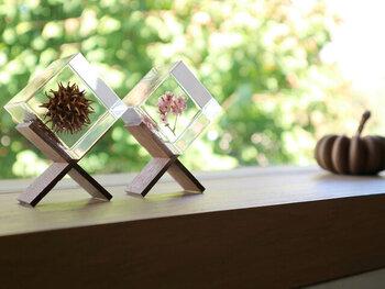 植物をアクリルキューブに閉じ込めた標本。まるで博物館のように出窓を彩ってくれます。ひとつ、ふたつ、並べるだけで窓辺の雰囲気が変わりますよ。