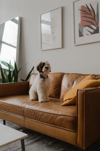 愛犬と快適な夏を*便利な「お家グッズ&お散歩グッズ」15選