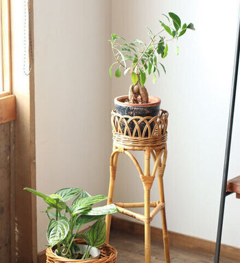 ラタンとグリーンの相性は抜群◎綺麗な編み目が植物の美しさを引き立ててくれます。時間が経つと色合いが変化するので、長く楽しめますよ。