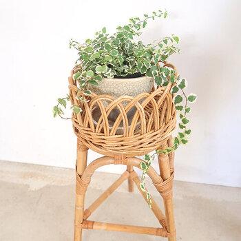 Sサイズは高さ45cmで、小さめのグリーンも置きやすいですね。つるの長い植物やサボテンなど、色々な観葉植物を飾って楽しみましょう!