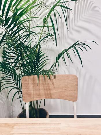 玄関やリビングに大きなヤシがあると、一気に南国リゾートの雰囲気になります。スペースが限られている小さいお部屋なら、棚におけるサイズのテーブルヤシもおすすめです。植物の影を見ているだけでも癒されます*