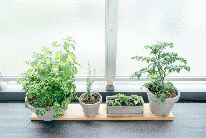 せっかくおうち時間が増えたから、ベランダで家庭菜園を始めるのもいいかも。バジルやパセリ、ローズマリーなど少しあるとうれしいハーブ類などをプランターで育てて。