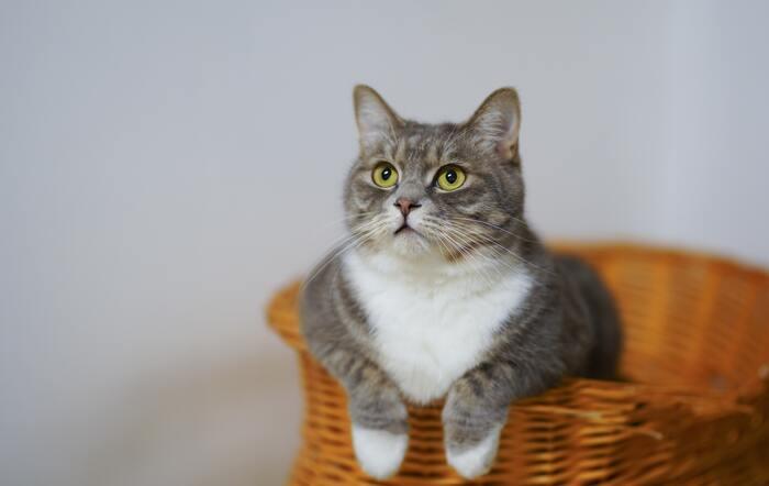 猫が好き!でも飼えないあなたに。おすすめ【猫グッズ・本】 特集