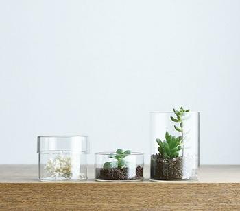 ガラスならではの透明感を活かして、植物を飾ったりお気に入りの雑貨をディスプレイしたり…。見せて楽しむ使い方ができちゃいます。
