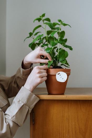 ハッカソウという種類のミントから抽出されたハッカ油には、虫除けの効果があります。このハッカ油を使ったアロマスプレーを網戸や玄関、エアコンのフィルターなどに使うことで、蚊やゴキブリなどハッカの香りを苦手とする虫を寄せ付けなくなります。