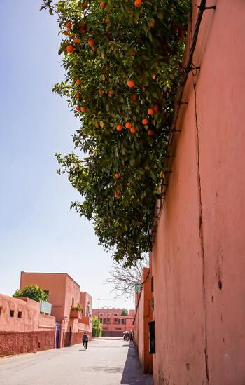 モロッコには、都市名にカラーを付けた愛称で親しまれているエリアがあります。「マラケシュピンク(レッド)」「フェズブルー」「シャウエンブルー」のように、都市の建物全体がピンクやブルーにペイントされているのです。  こちらはマラケシュのピンク。ピンクと言ってもやはり土色を混ぜたような落ち着いた色合いですね。
