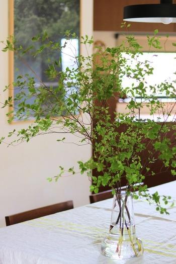枝物はお花よりもすっきりとした印象になり、どんなおうちにも似合います。瑞々しいグリーンの色合いは、お部屋を活気づけてくれますね。  お花に比べて、高さを出すことができるのも枝物の魅力。床に直置きしても迫力があって素敵です。