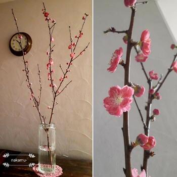 お花のついた枝を長く生かすと、まるで木そのものを持ってきたようにも思えます。
