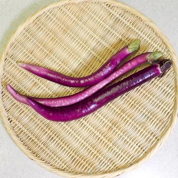 長さ:40~45cm 品種:庄屋大長、久留米長、味むらさき(ひもなす)  長なすよりもさらに細長い大長なす。「ひもなす」や「へびなす」と呼ばれることも。加熱するととろけるように柔らかくなりるから、焼き物や煮物にすると絶品。乱切りにして、炒め物や揚げ物にしてもいいですね。