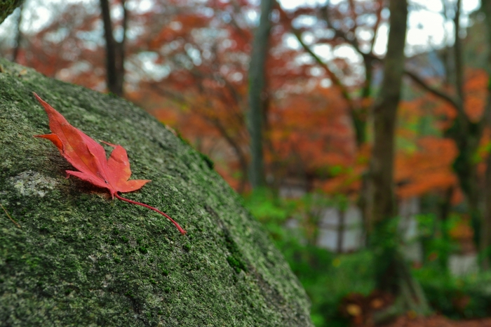 色付く紅葉やイチョウの葉の美しさに、改めて気づかされるかも。