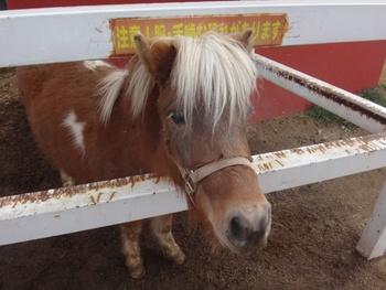 ふれあえる方法は、馬なら乗馬体験、フクロウなら手乗り撮影体験、ヤギならエサやり体験など動物によってさまざまです。お目当ての動物とはどんな形でふれあえるのか、事前にチェックしてから訪れましょう。
