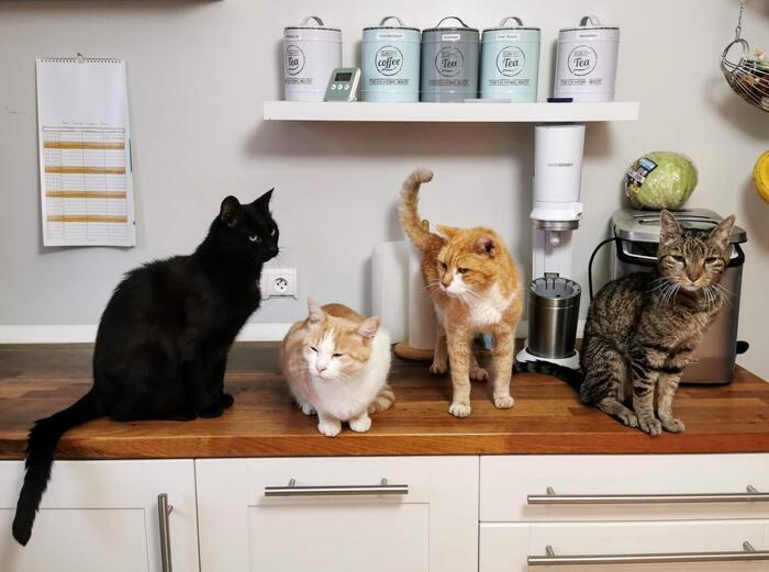 猫と暮らすインテリア実例 おしゃれな爪とぎやケージも!