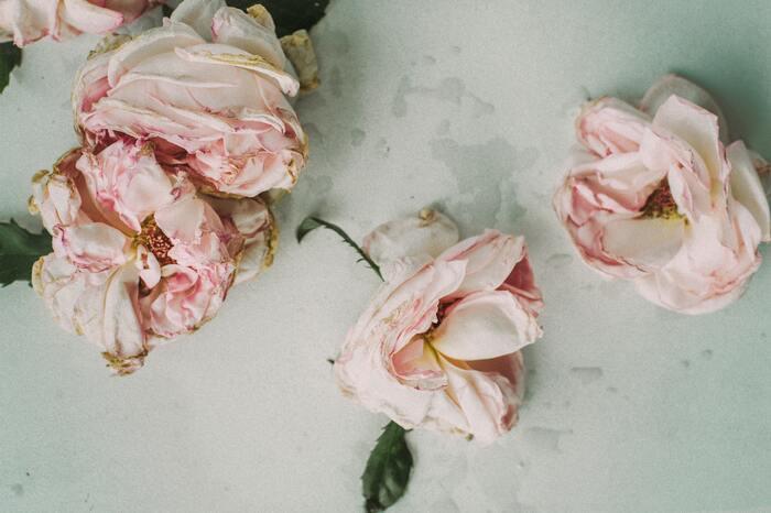 心揺さぶる言葉にきっと感性が磨かれる。今を生きる詩人の「詩集」9選