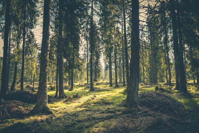 亡くなった人たちを偲びながら静かに暮らすつもりが、森の中は想像を超えるおかしな事件でいっぱい。たくさんの命と共に生きていることを実感し、生きる気力を取り戻していく姿は、これからの年の重ね方を熟考したい人の心に深く刻まれるはずです。