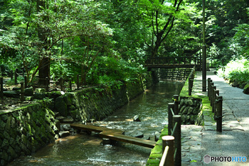 等々力渓谷には多くの湧き水があり、東京都の名湧水57選にも選定されました。湧き水が留まる場所には湿生植物が点在しているので、ゆっくりと歩きながら探してみましょう。