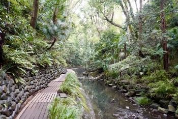 1kmほどの遊歩道は整備されていて、歩きやすいです。崖面には、古墳時代末期から奈良時代にかけて構築された横穴があったり、シラカシやケヤキなどが生き生きと枝葉を伸ばしていたりと、23区とは思えないほど自然豊かでリフレッシュできます。