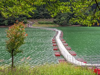 """湖面に浮かぶ「麦山の浮橋(むぎやまのうきはし)」は、通称""""ドラム缶橋""""と呼ばれています。かつてはドラム缶の上に板を渡した橋だったことからつけられた別名ですが、現在はポリエチレンや発泡スチロール製の浮きが使われています。"""