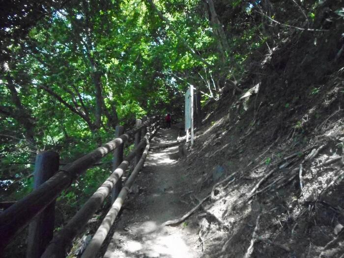 奥多摩湖畔には遊歩道が整備されていて、ハイキングにおすすめです。「いこいの路」「湖畔の小道」と名付けられた遊歩道は比較的歩きやすいですよ。夏でも木陰が多く涼しさを感じられます。