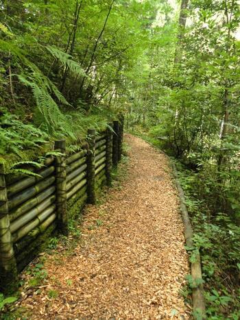 登計集落の先にある「東京都水道局 奥氷川神社 登計配水場」をスタート地点とするセラピーロードは、日本初の森林セラピー専用の遊歩道です。ウッドチップが敷き詰められた遊歩道は、踏みしめるごとに木の香りが広がりリラックス効果抜群。木陰が多く、暑さをしのげるのもうれしいですね。