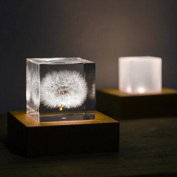 タンポポのキューブは、ふわふわとした綿毛がそのままの質感で閉じ込められています。別売りのライトで下から光を灯せば、一層柔らかさが際立ちます。
