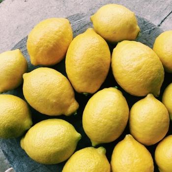 国産レモンの旬が来たら始めたい「レモン手仕事」&アレンジレシピ